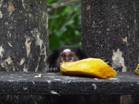 بوزادا لاجامار: You can feed monkeys also!
