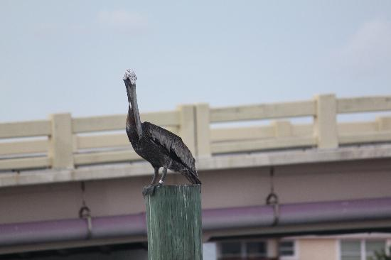 The Wharf : being watched