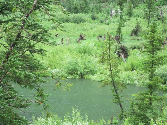 Cascade Canyon: moose at stream
