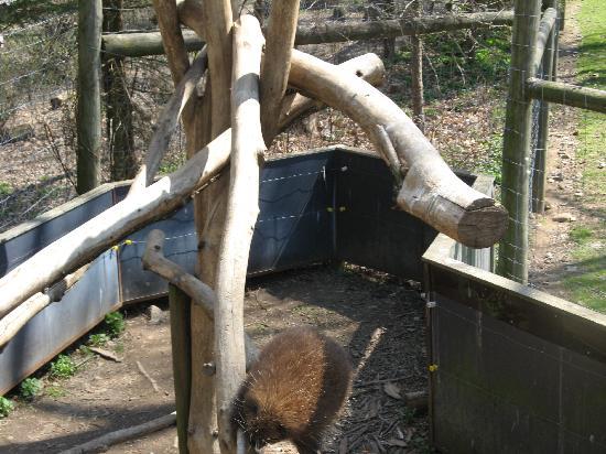 Trevor Zoo: Turkey displaying