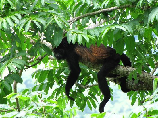 Casitas Azul Plata: Los monos habitan en los arboles alrededor
