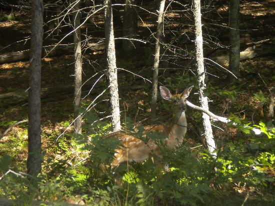 Ludington Pier House Hotel/Motel: A fawn spotted during a hike at the state park