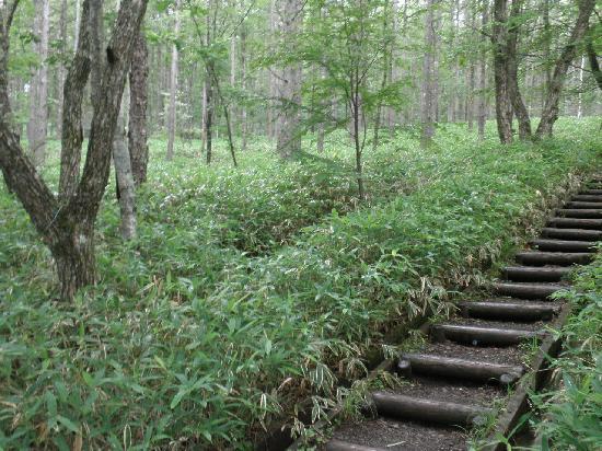 Kiyosato Kogen: ハイキングコースの路