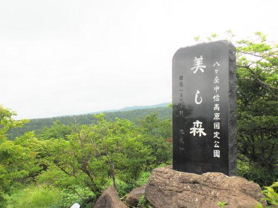 Forest Utsukushinomori