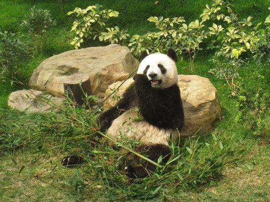 マカオ ジャイアントパンダ パビリオン(澳門大熊猫館)