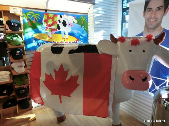 COWS Banff: カナダディにちなんで国旗が。