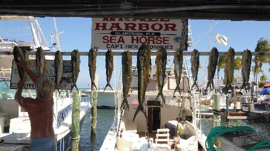 "Sea Horse Private Charters: our ""catch"" on the Sea Horse"