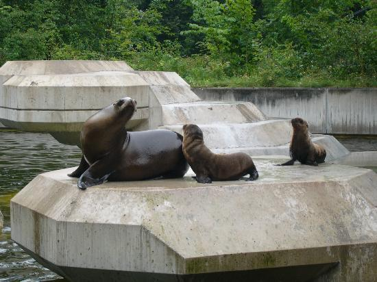 Tierpark Hellabrunn: Sea lions and baby sea lions