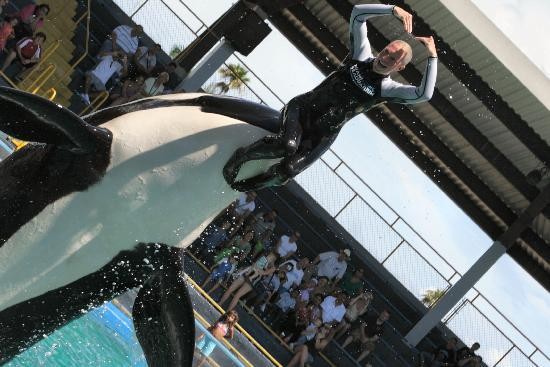 Key Biscayne, Floryda: Lolita the killer whale