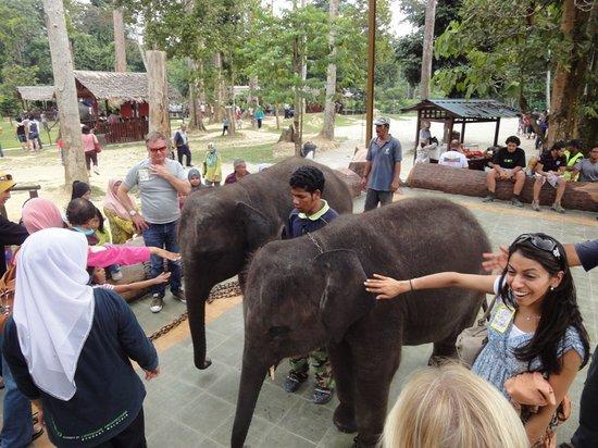 Pahang, Malasia: feeding