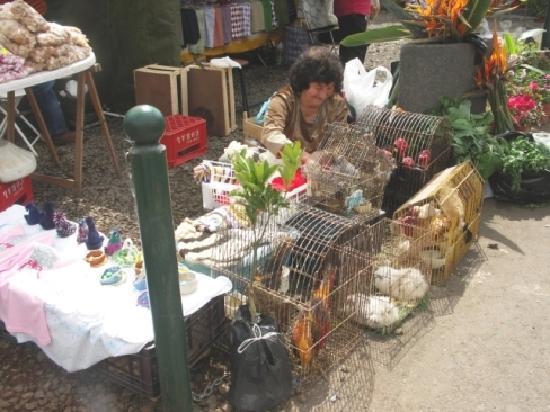 Canico, Portugalia: Bauernmarkt  Besuch bei einer Wanderung