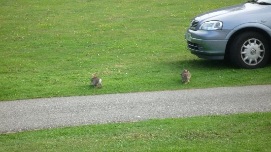 Warner Leisure Hotels Norton Grange Coastal Resort: Bunnies at Norton Grange