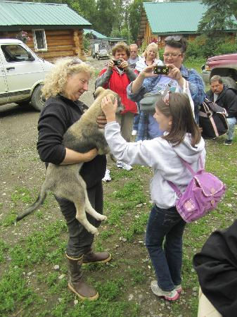 Talkeetna Sundog Kennel: Petting the puppies