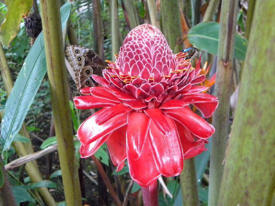 Hotel Villa Dolce: Butterfly garden