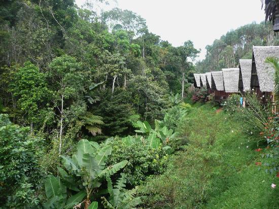 Direkt am Regenwald