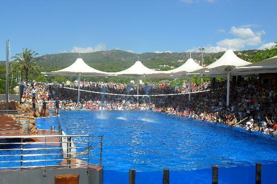Aparthotel Playa Mar & Spa: marineland- dolphins