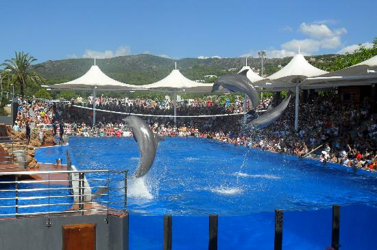 Playa Mar & Spa Aparthotel : Marineland- dolphins