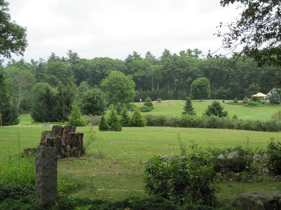 Merriland Farm Cafe: view from the restaurant, of the golf course next door