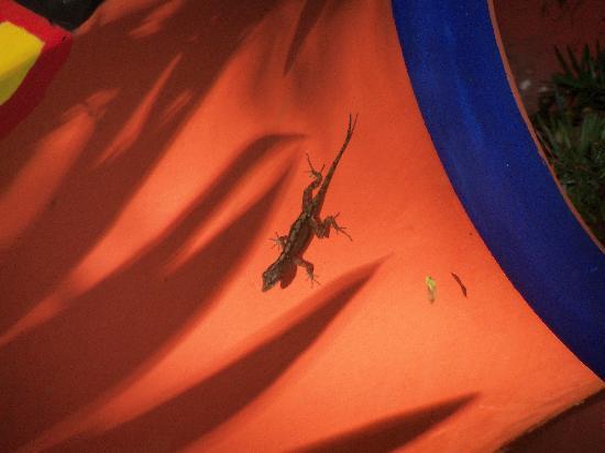 Occidental Cozumel: Little Lizard