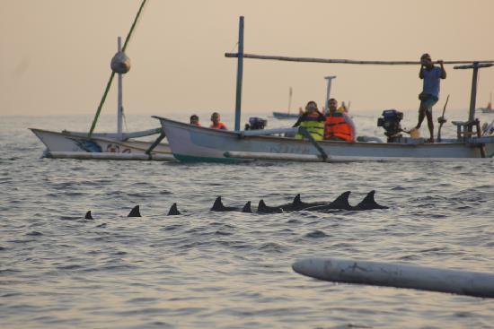 วิลล่า อากุง บีช อินน์: delphin watching