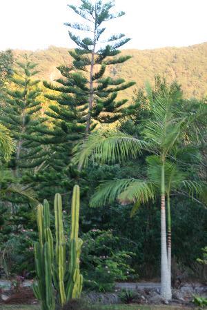Mountain View Lodge: so viele verschiedene Pflanzen!