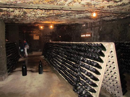 Barcelona Guide Bureau - Day Tours: Freixenet winery