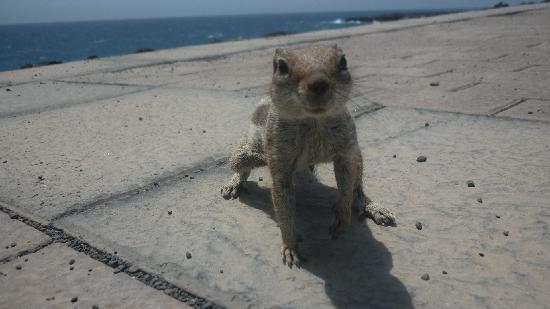 Globales Costa Tropical: A chipmunk!