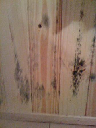 La Strada: Mold on pine wall paneling
