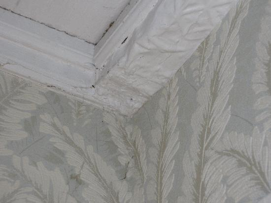 "Trinity House Inn: 8"" spider web above bed"
