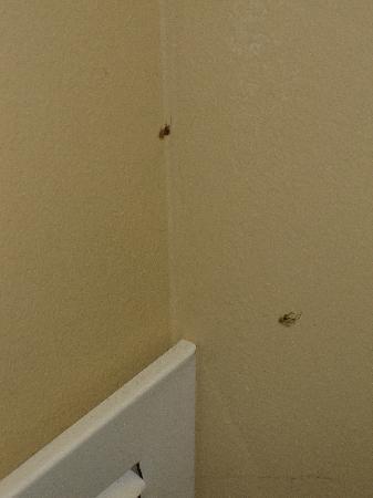 GrandStay Hotel & Suites Chaska: Spiders in public hallway