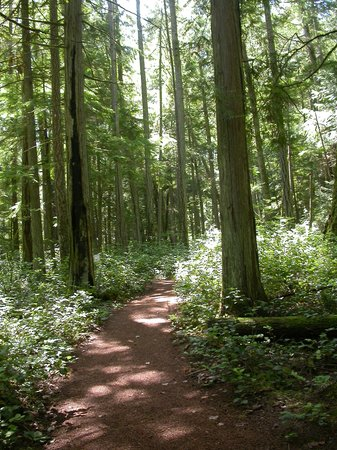 Milner Gardens & Woodland : One of many woodland trails