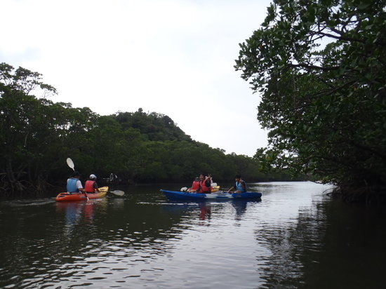 Mangrove canoe & Waterfalls Tour