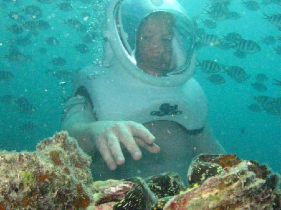 Sea Trek Fiji: Clams that close up when frightened