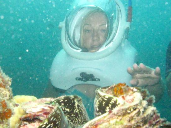 Sea Trek Fiji: We were told what we could and could not touch