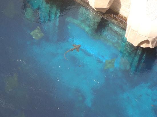 Atlantis, The Palm: L'aquarium vu de la chambre