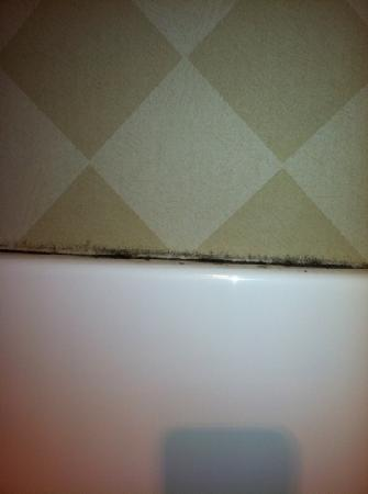 Holiday Inn Express South Haven: shower mold found in 2 rooms