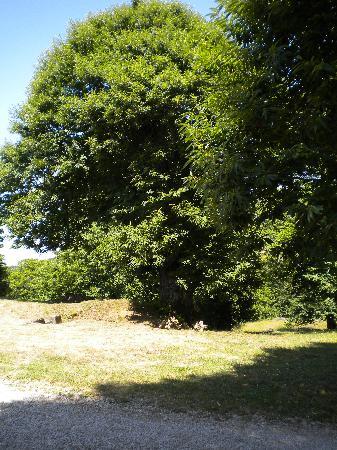 Agriturismo I Rondinelli: un castagno plurisecolare