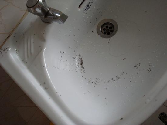 Tiny Ants In Bathroom laptoptabletsus
