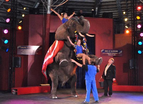 Circus World: Elephant Act
