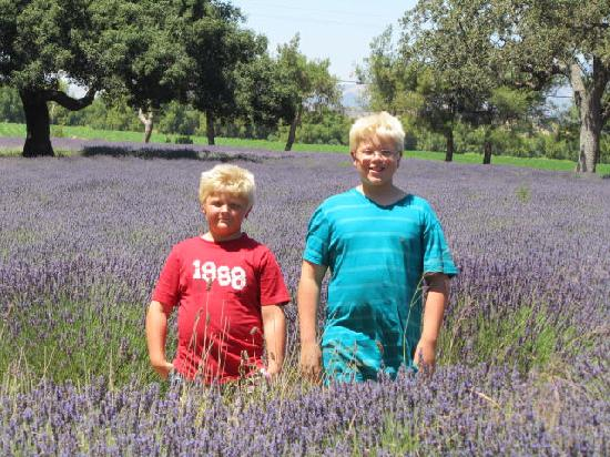 Clairmont Farms: The boys standing in the field.