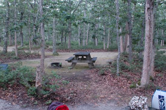 Martha's Vineyard Family Campground: View of our site