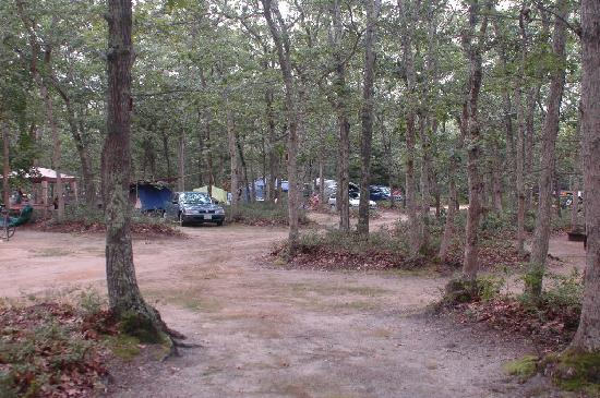 Martha's Vineyard Family Campground: View from our site