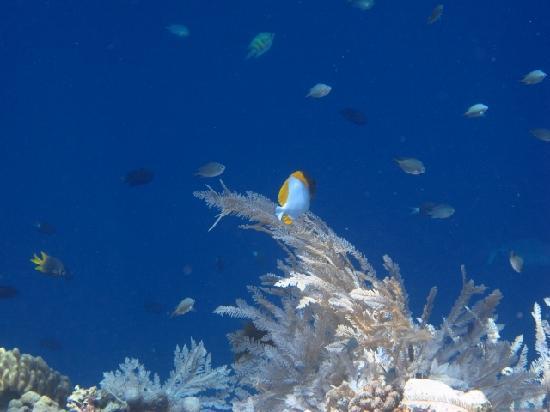 Living Colours Dive Resort: Experimenting UW shooting 1