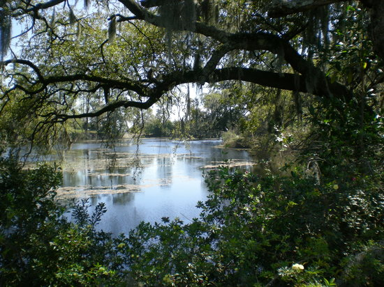 Wilmington, NC: pond view through the trees