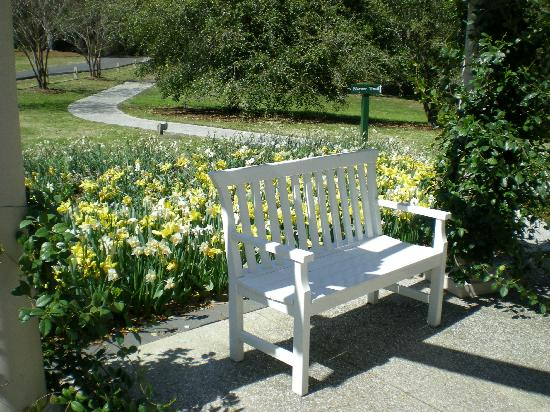 Airlie Gardens: Garden bench, flanked w/ daffodils