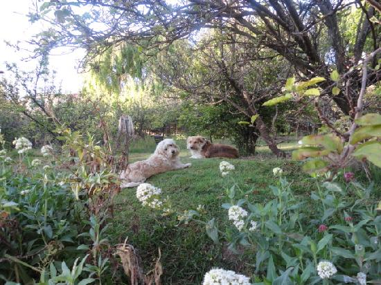 Behind the Garden House, lovely gardens and friendly doggies.