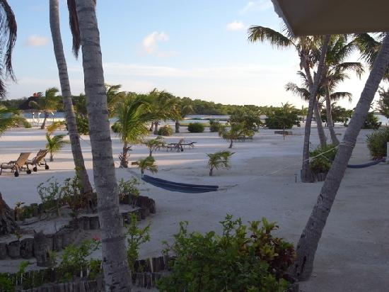 Turneffe Island Resort: One of many hammocks