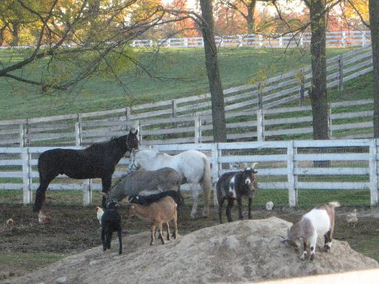 Shamrock Farms Bed and Breakfast: Animals