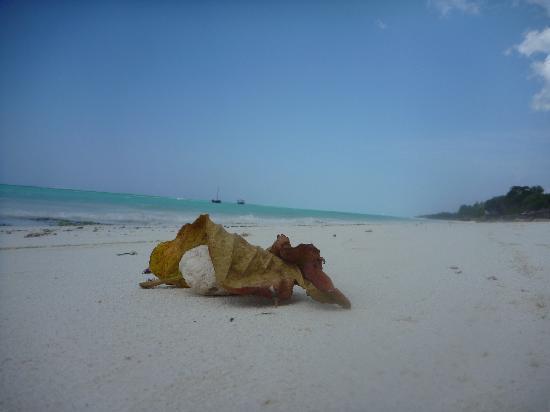 Essque Zalu Zanzibar: ...und Strand...