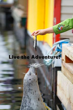 Discover Canada Tours: Do you want to feed seals? It's with DCT in Victoria!